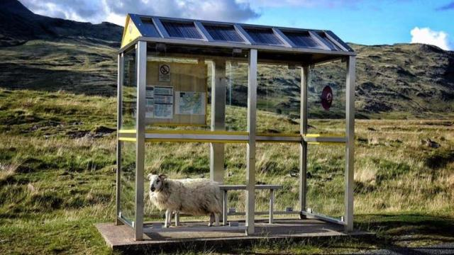 445751-scotland-from-the-roadside